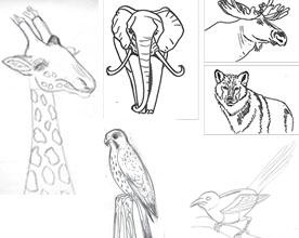 Lär dig att skissa djur genom att hitta formen